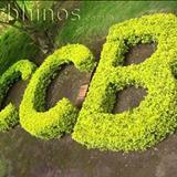 CCB hinario 5 - NOvos hinos CCb