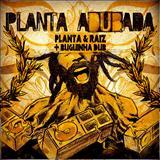Planta & Raíz - Planta Adubada