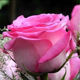 Um Amor Para Recordar - be with you-mandy moore