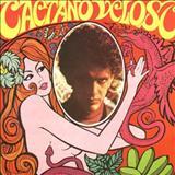 Caetano Veloso - O MELHOR DOS FESTIVAIS