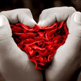 Verdadeiro Amor - (lindenberg)  banda magnificus